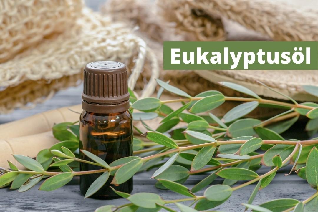 Eukalyptusöl kaufen